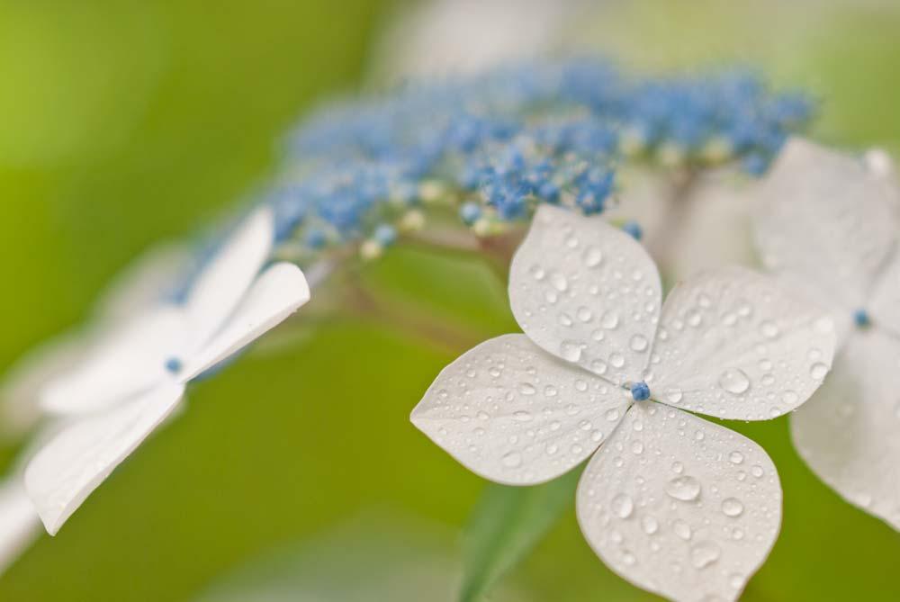 梅雨のイメージ写真
