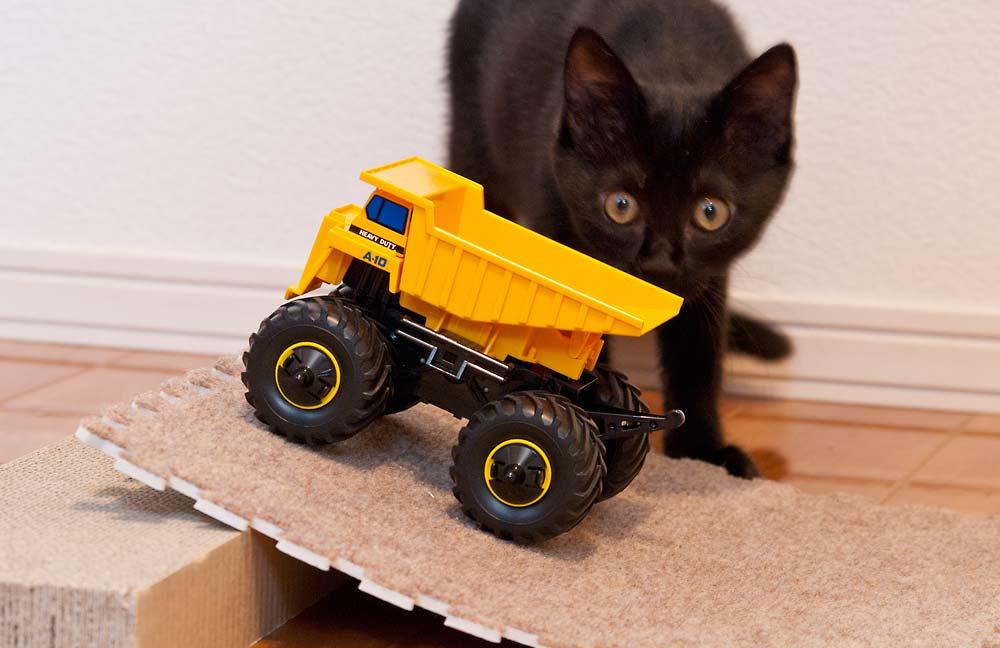 ワイルドミニ四駆と猫